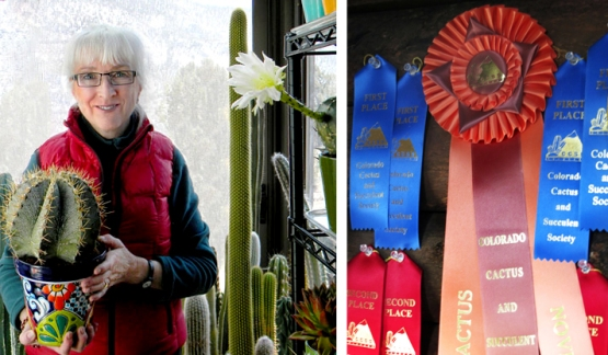McCoy with a prize-winning cactus (Photo Michael McCoy). (Right) Cactus prize ribbons.