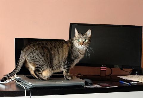 studio-cat-copy